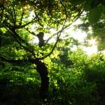 Дерево Железноводск