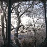 Деревья в парке Железноводска зимой