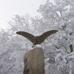 Орел в снегу